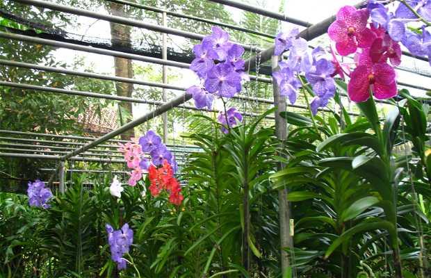 Sai Nam Phung Orchid Farm