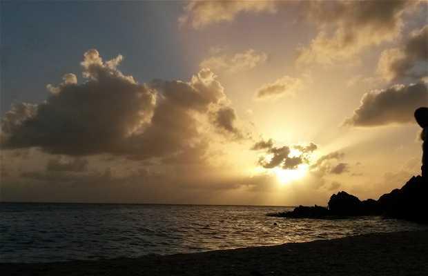 Playa Shell