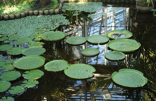 Jardín Botánico de Ginebra