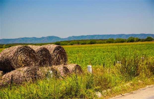 Corredor agrícola Allende-San Juan