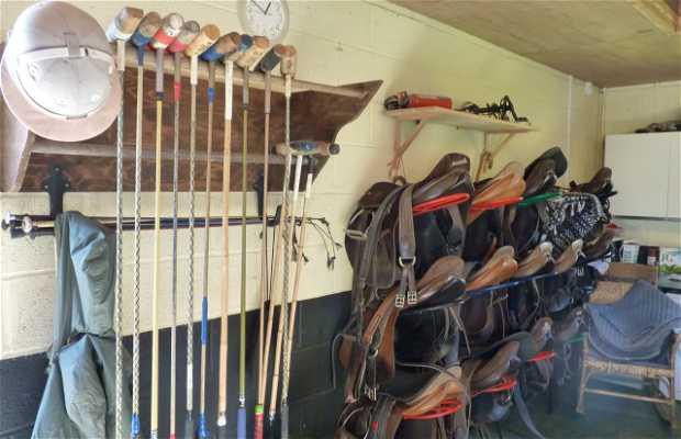 MHF Polo Club & Polo School