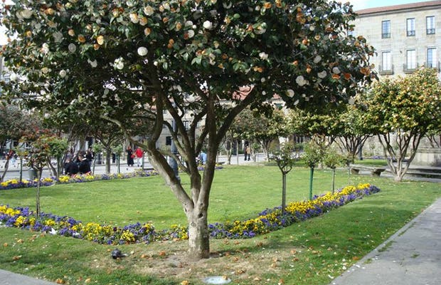 Jardines de Castro Sampedro