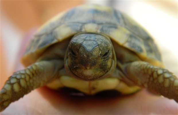 Centro de Recuperación de Anfibios y Reptiles