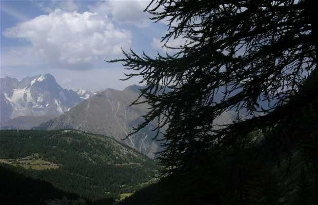Bosque del Héris