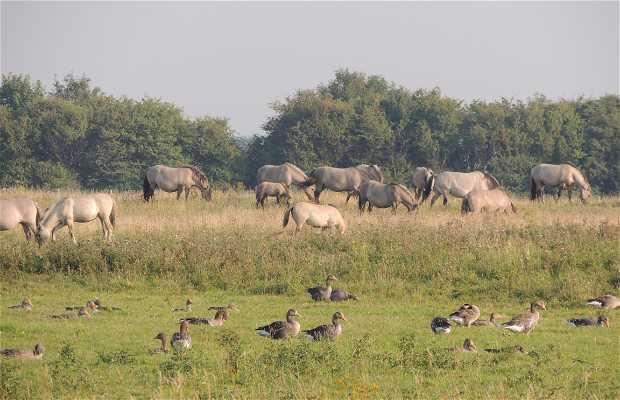 Reserva Natural de Het Zwin