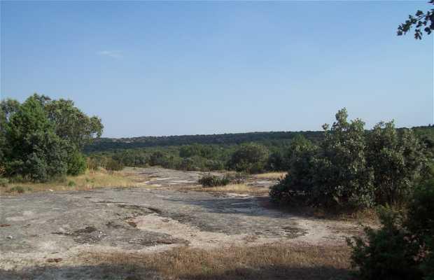 La Cabrera Pasture
