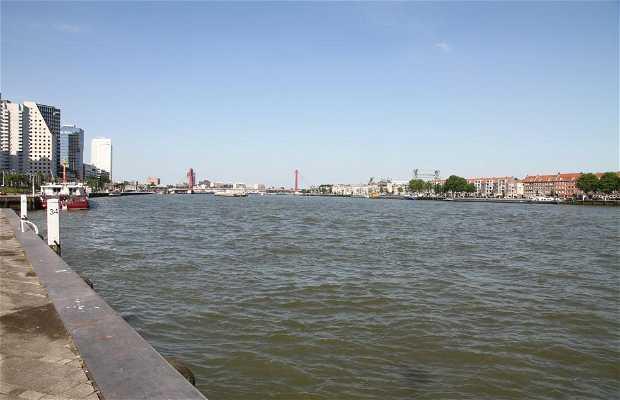Rutas en barco desde el puente Erasmus