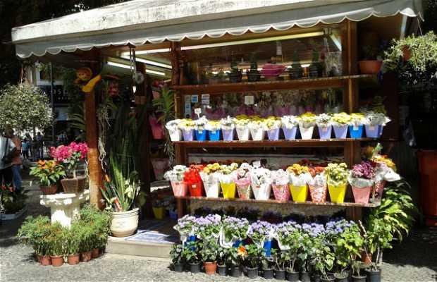 Jardín Alexandro. Flores y Plantas