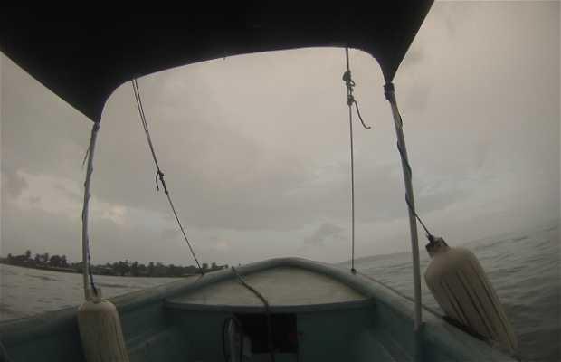 Tour Delfines y Estrellas de Mar