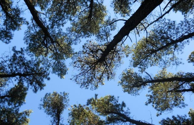 Bosque de Claromecó