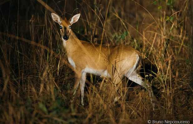 Safári Noturno no Kafue National Park