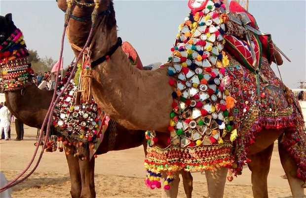 Festival del Camello