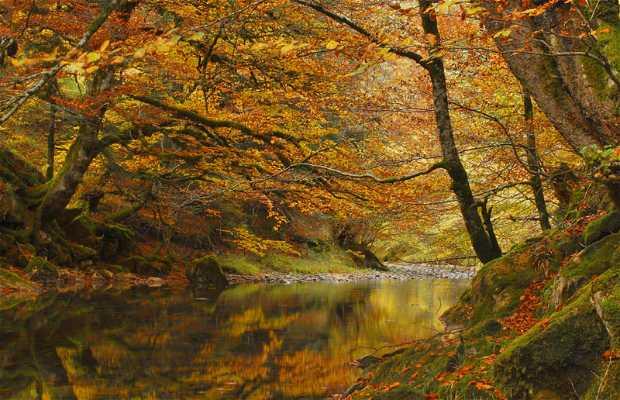 La forêt d'Irati
