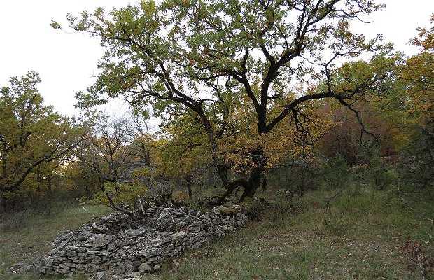 Forêt de Couzage