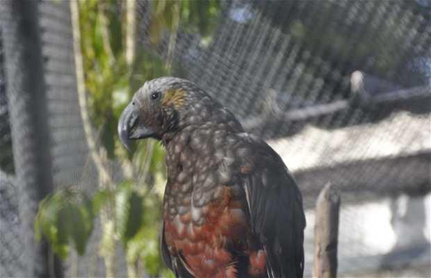 Te Anau Wildlife Centre