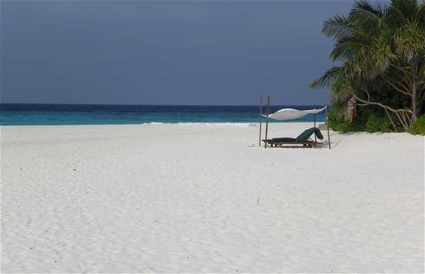 Coco Palm Beach