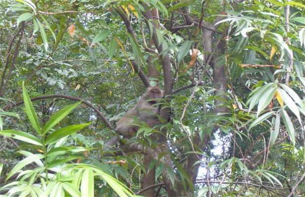 Reserva Forestal Bukit Nanas