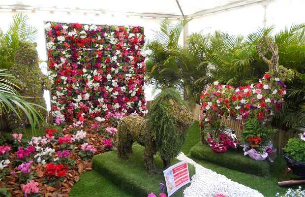 Exposición de flores y artesanía canaria