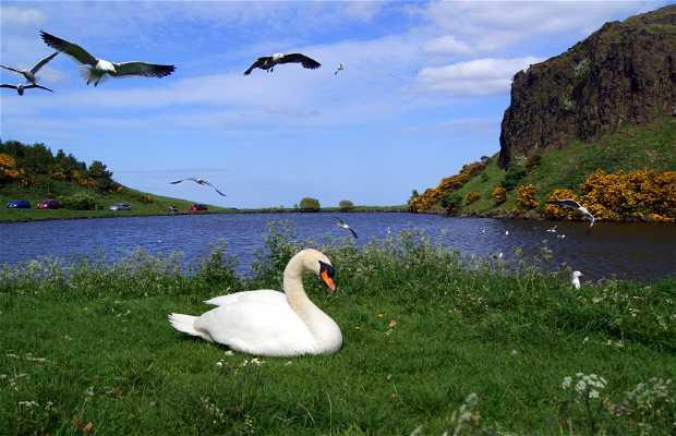 Parque de Holyrood
