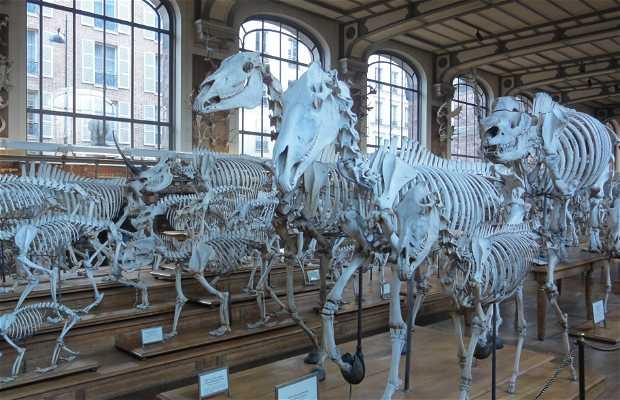 """Résultat de recherche d'images pour """"galerie paléontologie"""""""