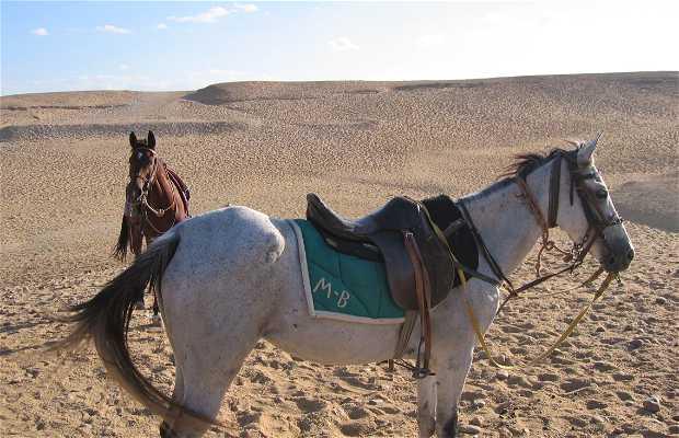 Passeio a Cavalo ou Camelo perto das Pirâmides
