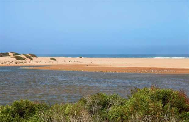 Estuaire de l'Oued Massa