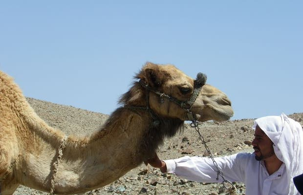 Stroll through the Sinai with Camel