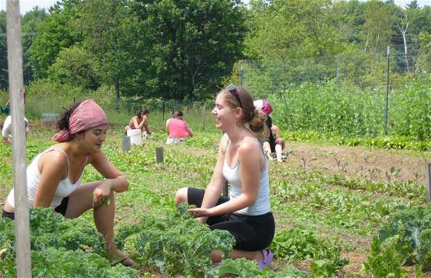 Community Garden in Portland