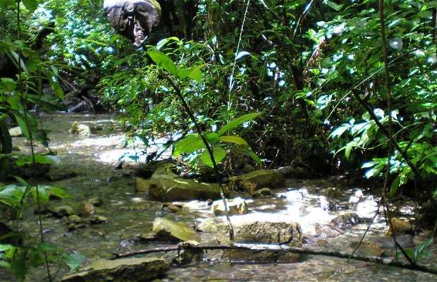 Jungle lacandone