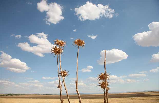Campos de Caudilla. Toledo. Castilla la Mancha