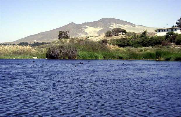 Humedal de Huasco