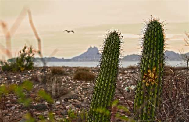 La mer de San Carlos Sonora Mexico