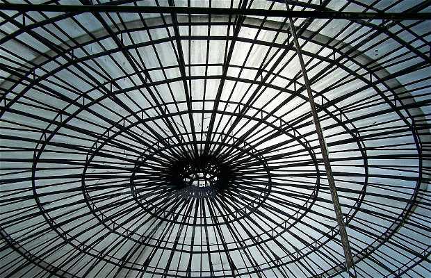 Wire Opera House (Opera de Arame)