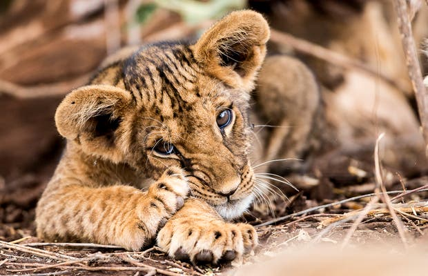 Parco Nazionale Samburu
