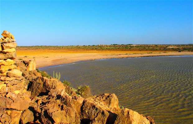 Punta Aguja