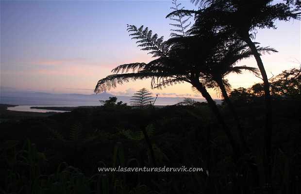 Mirador Daintree Forest