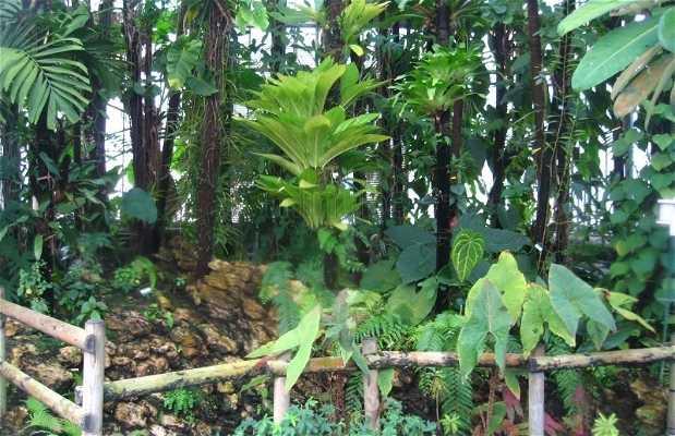 Jardin de las Plantas