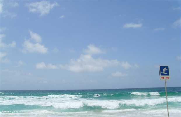 Spiaggia di Maroubra