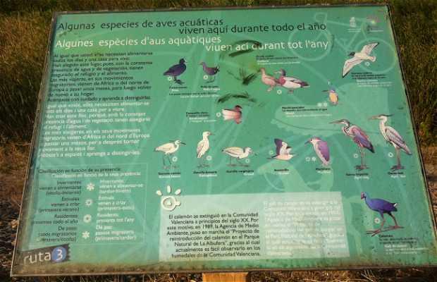 Avistamiento de aves aquatic-Alboraya
