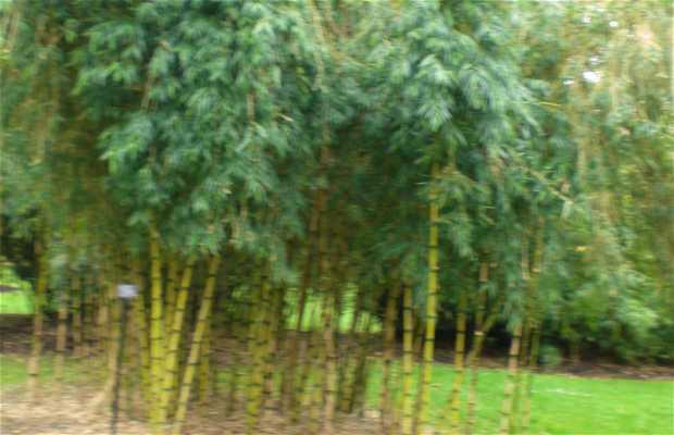 Jardín de Bambú