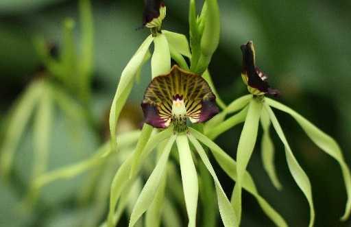 Invernaderos del Jardín botánico de montreal