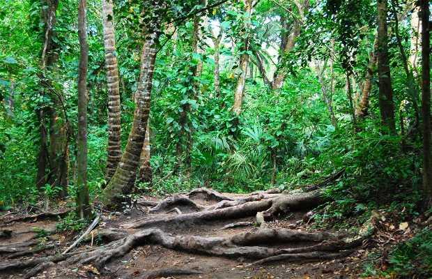 Bosque selvático del Parque Nacional Tayrona