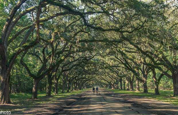 Wormsloe Oak Plantation