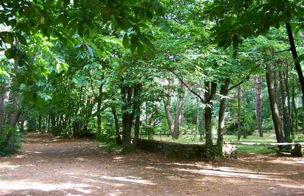 Magpie island site