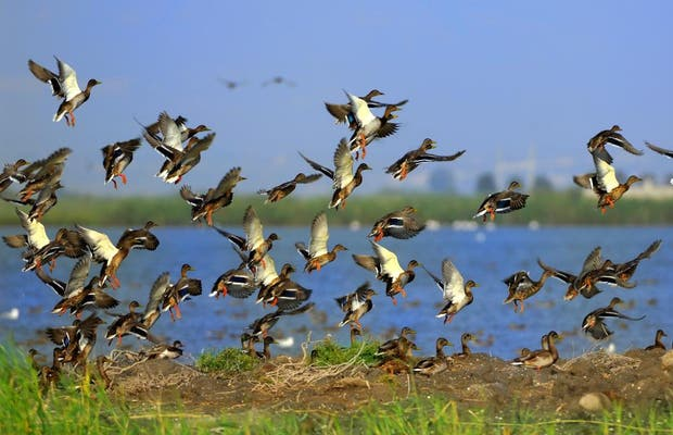 Puesto de observación de aves