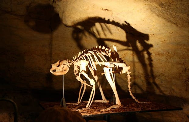 Australian Fossil Mammal Sites (Riversleigh and Naracoorte)