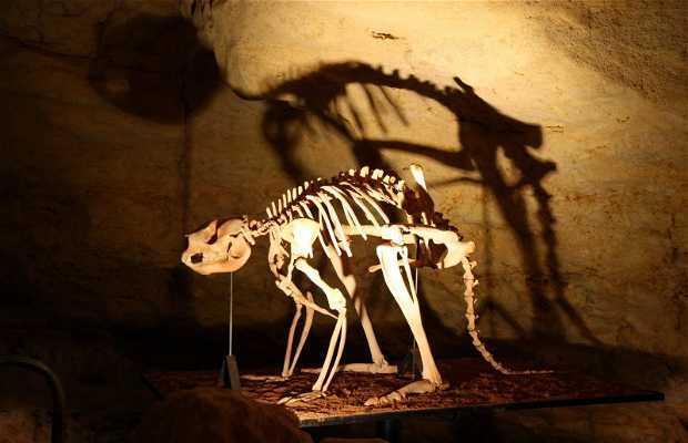 Fósiles de mamíferos en Riversleigh y Naracoorte