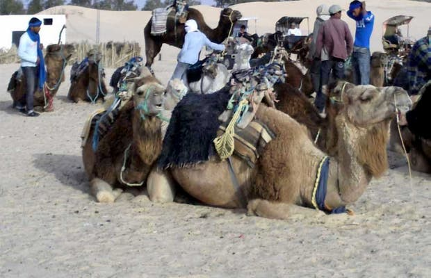 Ride Camel along the Great Dune of Offra