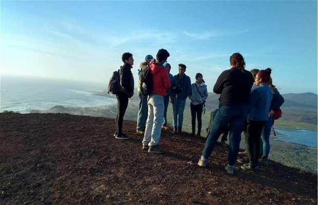 Observadores de Aves del Valle de San Quintín