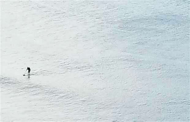Mirante dos Golfinhos de Tabatinga